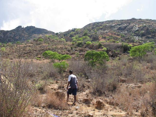Apatite Fields