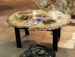 Large Petrified Wood Slices > 60cm (23�) 19kg/pc (42LB/pc) Class