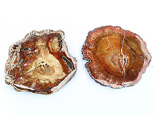 Red Petrified Wood Slices (3-5