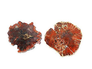 Red Petrified Wood Slices (5-7