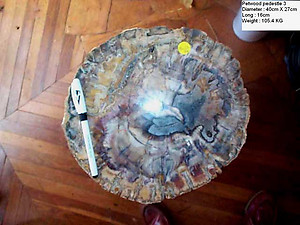 Petrified Wood Pedestal 105.4 Kg