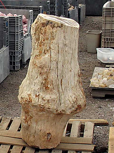 Petrified Wood Pedestal 398Kg