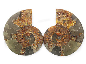 Ammonites Cut and Polished 6-10 inch - Pairs - AA Quality