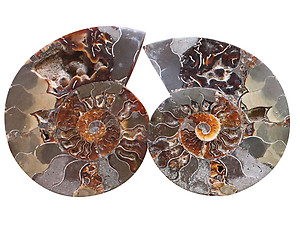 Ammonite Cut & Polished Pairs, 9-11cm - AA Quality