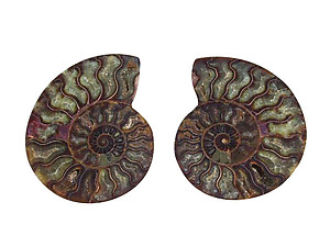 Ammonites Pairs 4-6inch AAA Quality - Wholesale Lots