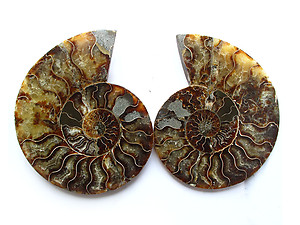 Ammonite Cut & Polished Pairs, 9-11cm - AAA Quality