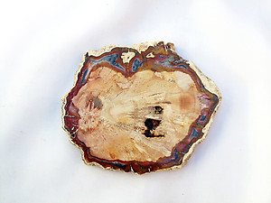 Petrified Wood Slice (3-5