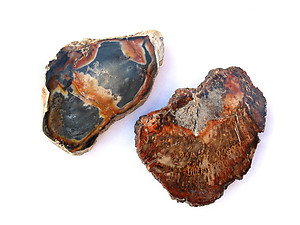 Petrified Wood Slice (1-3