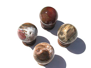 Petrified Wood Spheres (55mm)