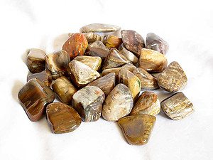 Petrified Wood Tumbled Stones Large (30-45mm) - 5LBS