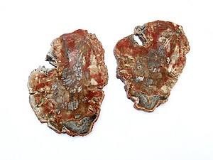Red Petrified Wood Slices (7-10