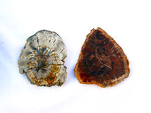Petrified Wood Slices (3-4