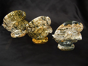 Sea Jasper Sunfish - 5pcs