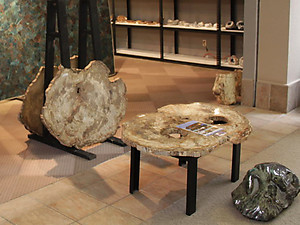 "Large Petrified Wood Slices > 60cm (23"") 21kg/pc (46LB/pc) Class"
