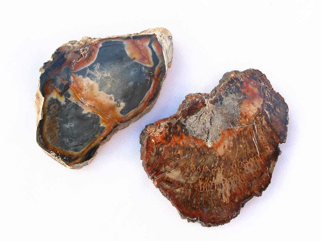 Quality Petrified Wood Slices (1-3