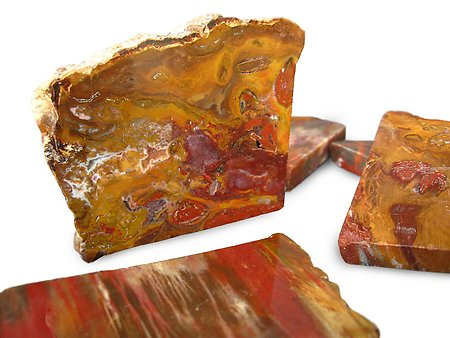 Petrified Wood Polished One Face