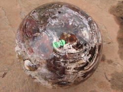 Petrified Wood Large Sphere (42,40Kg)