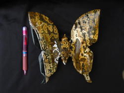 Sea Jasper Butterfly - Large