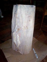 Petrified Wood Pedestal 54.35 Kg