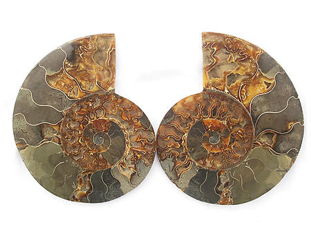 Ammonites Pairs 4-6inch AA Quality - Wholesale Lots