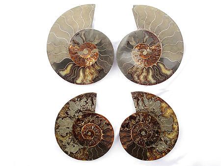 Ammonites Cut and Polished 8-10 inch - Pairs - AA Quality