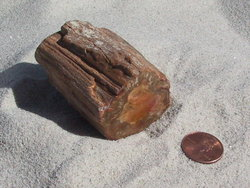 Petrified Wood Small Branches - Wholesale
