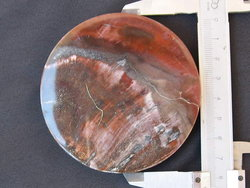 Petrified Wood Coasters