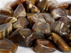 Petrified Wood Tumbled Stones - Large (30-45mm) - 1LB Bag